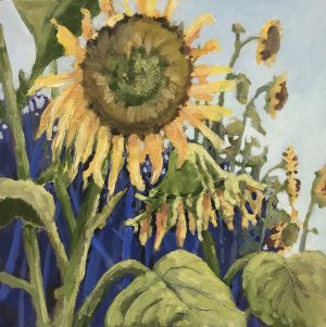 VanDusen Sunflowers, 12 x 12, oil on board